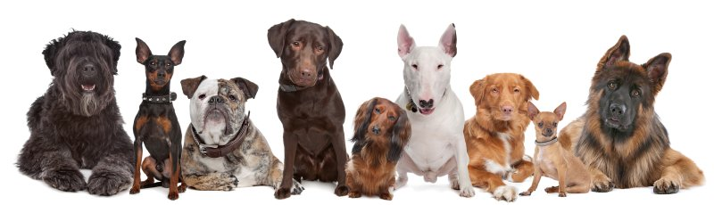Gruppe verschiedener Hunderassen