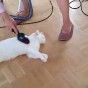 Katze wird mit Cofix abgesaugt