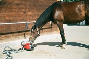 Pferd beschnuppert den Cofix Pferdestaubsauger