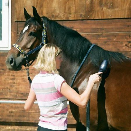 Pferdestaubsauger im Einsatz an einem Pferd