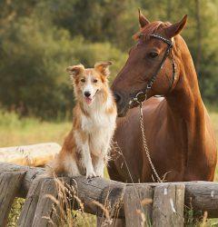 Cofix Hundebürste für Pferd + Hund