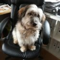 Eine große Bereicherung für unseren Haushalt und für die Hundepflege!